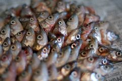 Fish heads on paper. Smelt heads on a newspaper Royalty Free Stock Photography