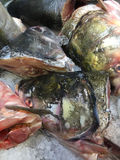Fish heads in refrigerator for sale Royalty Free Stock Images