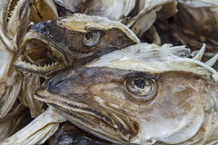 Fish heads Stock Photo