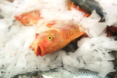 Fish heap on open market Stock Photography