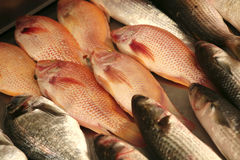 Fish heap on open market Royalty Free Stock Image