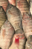 Fish heap on open market Royalty Free Stock Photos