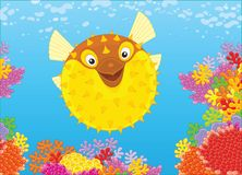 Fish-hedgehog on a reef. A funny balloonfish swimming in blue water over colorful corals in a tropical sea, a vector illustration in cartoon style stock illustration
