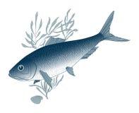 Fish herring Stock Photography