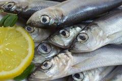 Fish herring and lemon Stock Photo