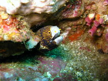 Fish hiding in coral reef Royalty Free Stock Images