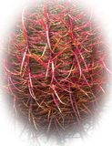 Fish Hook Barrel Cactus royalty free stock photography