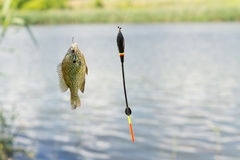 Fish on hook dangling from fishing line. Green small fish on hook dangling from fishing line Stock Photo