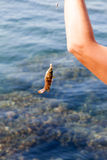 Fish hooked on a hook against the sea Stock Image