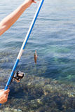 Fish hooked on a hook against the sea Royalty Free Stock Photos