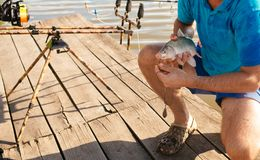Fish hooked on mouth in male hands, bait fishing. Bait, bait fishing, fish catching. Carp, crucian carp, trout on fishhook, angling. Trophy success achievement stock photography
