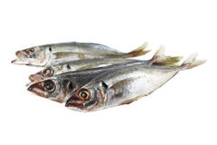 Fish horse mackerel. Fresh raw Royalty Free Stock Photos