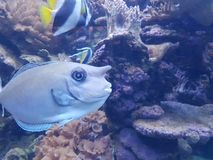 fish with human face royalty free stock photos
