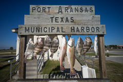 Fish hung on cleaning station in port aranas texas Royalty Free Stock Image