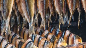Lined up in the Smokehouse. Fish hung inside a smoke house Stock Images
