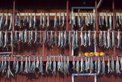 Fish hung to dry Stock Photos