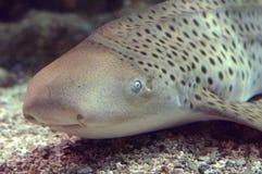 Fish I stock image