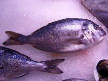 Fish on Ice. Sea Bream fish on ice,displayed at the restaurante Royalty Free Stock Photo