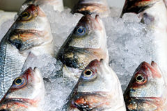 Fish in ice Royalty Free Stock Photography