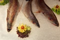 Fish on ice Royalty Free Stock Image