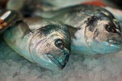 Fish on ice Stock Photos