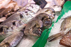 Fish on ice Royalty Free Stock Image
