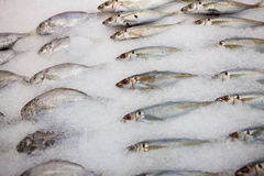 Fish on ice. Seafood on ice at the fish marke Royalty Free Stock Photography