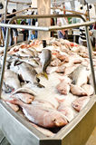 Fish on Ice Stock Photography