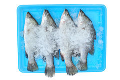 Fish in the ice Stock Photos