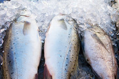Fish ice Royalty Free Stock Images
