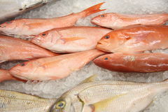 Fish on Ice. Freshly caught fish on ice Royalty Free Stock Photo