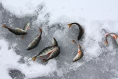 Fish on ice Stock Images