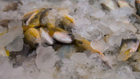 Fish. In ice. A close shot from  market Royalty Free Stock Photos