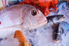 Fish in ice. Different kind of fish next to other seafood Stock Image