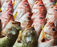 Seafood on ice at the fish market. Fish on ice exposition sea market. Seafood on ice Royalty Free Stock Image