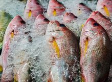 Fhish in ice displayed at a fish market. Fish on ice exposition sea market. Seafood on ice. background Sea food. Healthy food concept Stock Image