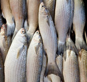 Fish on ice at the fish market. Thailand stock photography