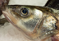 Fish on ice. Fresh  seafood supermarket Royalty Free Stock Images