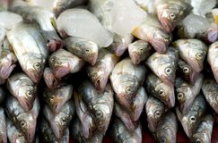 Fish on Ice at Market Royalty Free Stock Photography