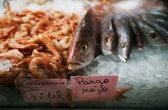 Fish in ice at a market Stock Images