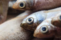 Fish on ice at the market. Fresh fish on ice at the market royalty free stock image