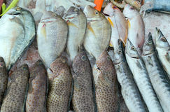Fish on ice market Stock Photography