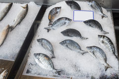 Fish on ice in the market Royalty Free Stock Photography