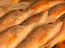 Fish on ice at a fish market. Red snapper fish on ice at a fish market being sold Royalty Free Stock Images