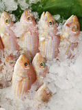 Fish in the ice Royalty Free Stock Images