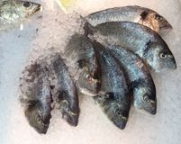 Fish on ice for sale Royalty Free Stock Photo