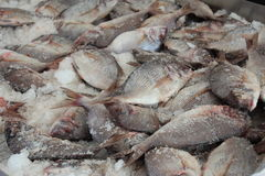 Fish on ice. Fish on shaved ice at outside market Royalty Free Stock Photo