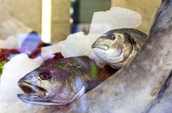 Fish in ice on a show-window Stock Images