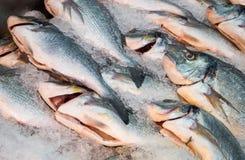 Fish on Ice. Some fresh fish on ice Royalty Free Stock Photo