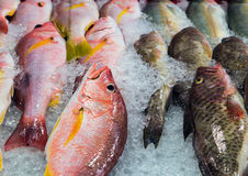 Fish ice at street market. Fresh cool fish ice at street market. Seafood on ice, background Sea food Royalty Free Stock Photography